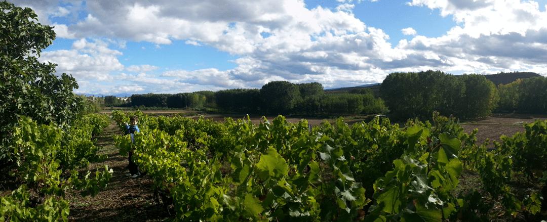 Vive tu propia experiencia enológica en La Rioja